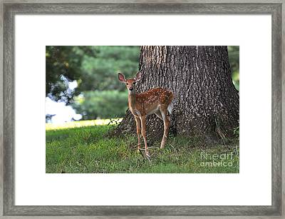 Fawn Framed Print by Todd Hostetter