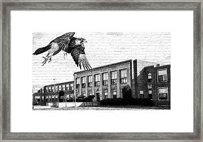 Fchs Falcons Framed Print
