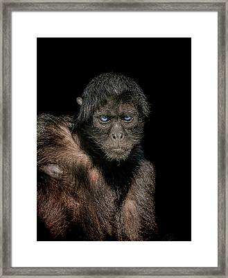 Fearless Framed Print by Paul Neville