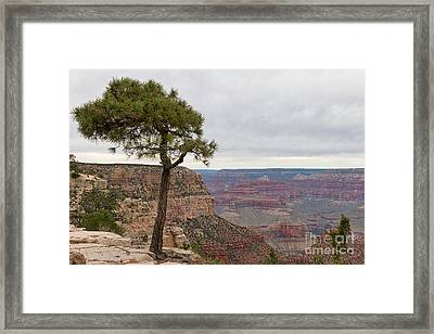 Fearless Tree Framed Print