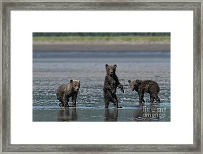 Fearsome Threesome Framed Print