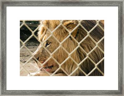 Feast For A King Framed Print