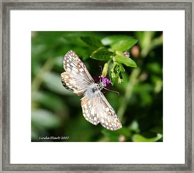 Feast Of Mexican Heather  Framed Print by Linda Ebarb