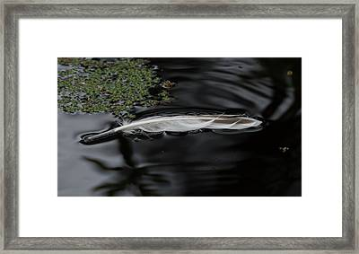 Feather Floating On A Still Pond Framed Print by Marilyn Wilson