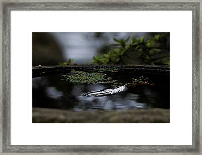 Floating On A Still Pond Framed Print by Marilyn Wilson