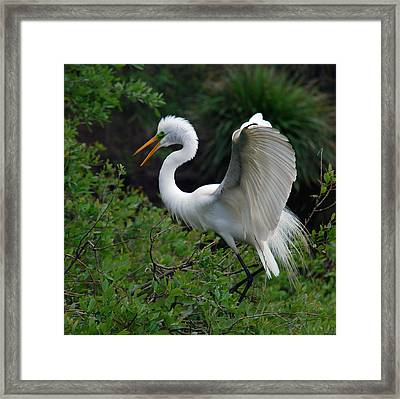 Feather 8-8 Framed Print by Skip Willits