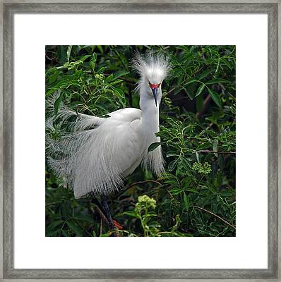 Feather 8-9 Framed Print by Skip Willits