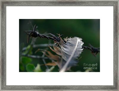 Feather And Barbed Wire Framed Print