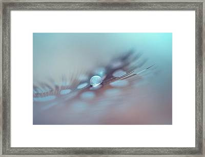 Feather And Water Drop Framed Print by Jenny Rainbow