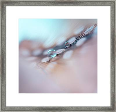 Feather And Water Droplets Framed Print by Jenny Rainbow