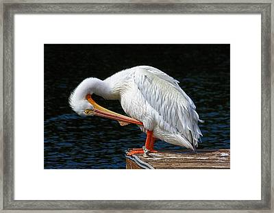 Feather Check Framed Print by HH Photography of Florida