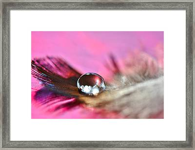 Feather Drop Framed Print by Diane Alexander