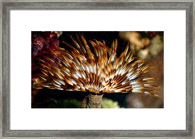 Feather Duster Framed Print by Anthony Jones