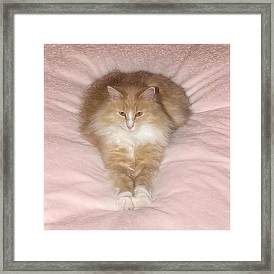 Feather Duster Framed Print