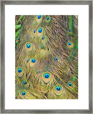 Framed Print featuring the photograph Feather Finesse by Margaret Bobb