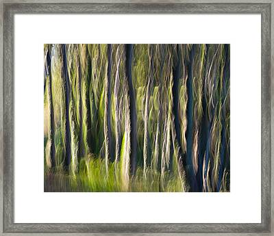 Feather Forest Framed Print