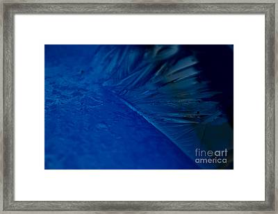 Feather Of Ice Framed Print by Sverre Andreas Fekjan
