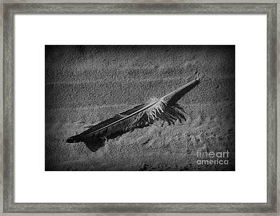 Feather On The Sand Framed Print by Paul Ward