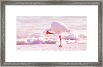Feather Out Of Place Framed Print by Betsy Knapp