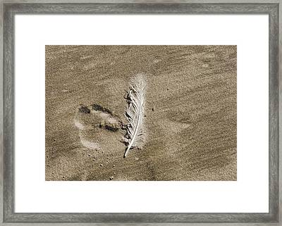 Feather Print Framed Print by JAMART Photography