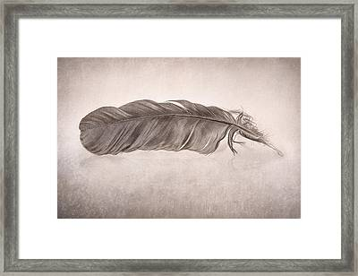 Feather Framed Print by Scott Norris