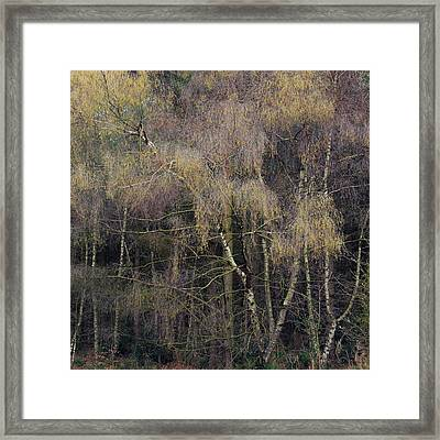 Feathered Framed Print by Chris Dale