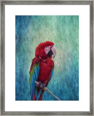 Feathered Friend Framed Print by Kim Hojnacki