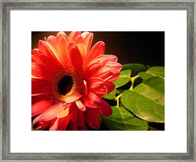 Feathered Pink Framed Print