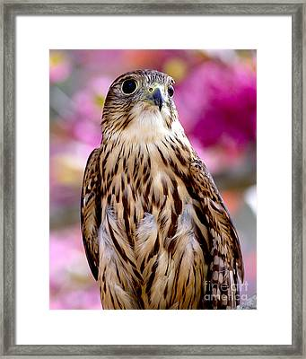 Feathered Wizard Framed Print