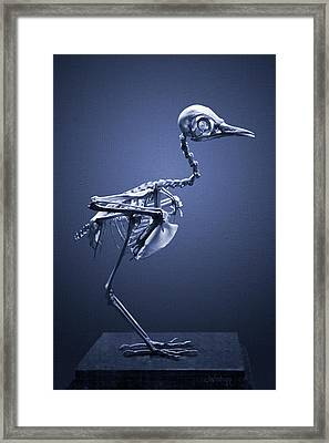 Framed Print featuring the photograph Featherless In Blue by Joseph Westrupp