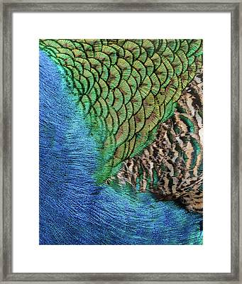 Feathers #1 Framed Print