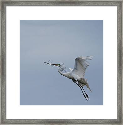 Feathers 8-3 Framed Print