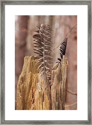 Feathers And A Stump. Casey Park, Ontario, Ny Framed Print