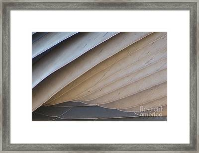 Feathers Framed Print by Mary Mikawoz