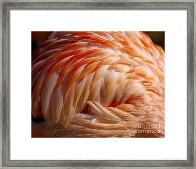 Feathers Of Pink Framed Print