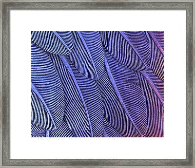 Feathers Purple To Blue Framed Print