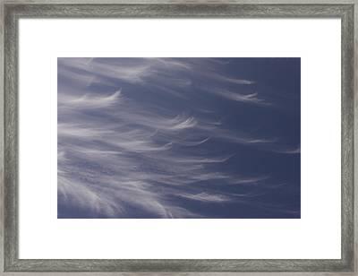 Framed Print featuring the photograph Feathery Sky by Shari Jardina
