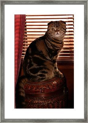 February 2007 Framed Print
