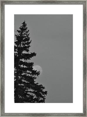 February Morning Moon Framed Print by Maria Suhr