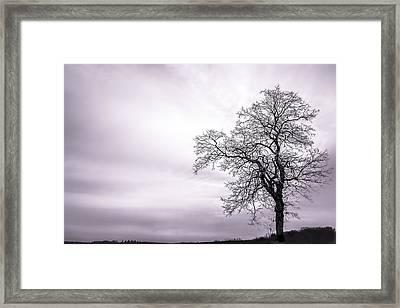 February Morning Framed Print