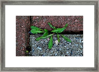 Framed Print featuring the photograph February Surprise by Marilynne Bull