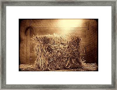 Feed Framed Print by American West Legend By Olivier Le Queinec
