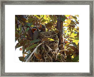 Framed Print featuring the photograph Feed Me by Christie Minalga