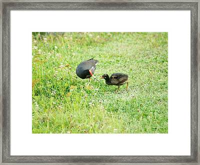 Feed Me Moor Framed Print by Lynda Dawson-Youngclaus