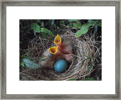 Feed The Hungry Framed Print by Erika Kennedy