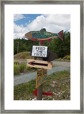 Framed Print featuring the photograph Feed The Trout by Suzanne Gaff