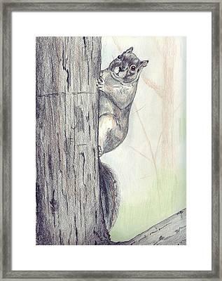 Feeder Raider Framed Print by Debra Sandstrom