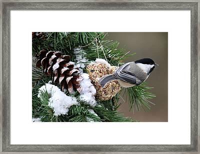 Feeding Feathered Friends Framed Print