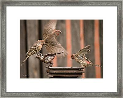Feeding Finches Framed Print
