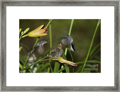 Feeding Frenzy 12 Framed Print by E Mac MacKay